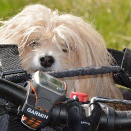 Ausrüstung für Radreisen mit kleinem Hund