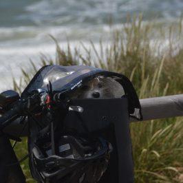 Radfahren auf Sylt: 10 Tipps mit dem Hund