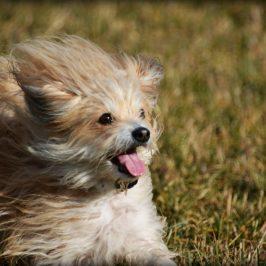 Kontaktanbahnung: Mit Hund ist sie viel leichter