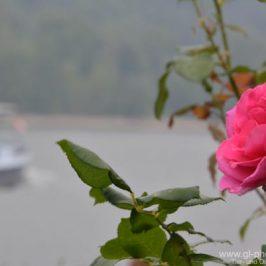 Rheinradtour