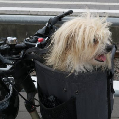 Fahrradhundekorb