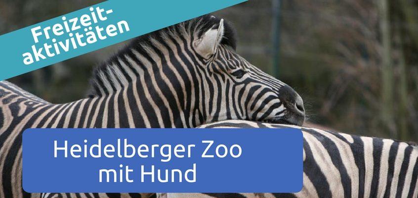 Heidelberger Zoo mit Hund