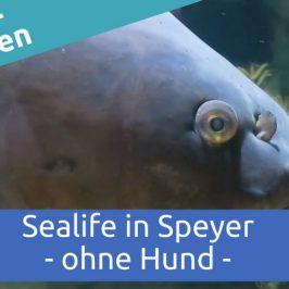 Sealife in Speyer – ohne Hund
