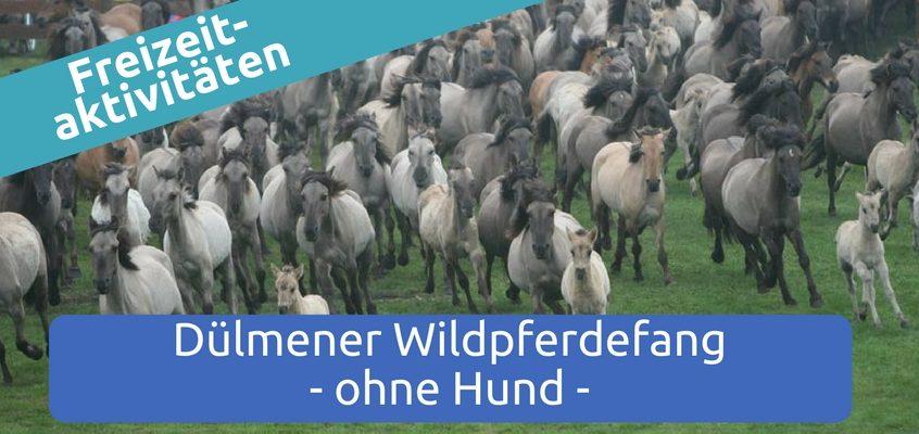 Dülmener Wildpferdefang