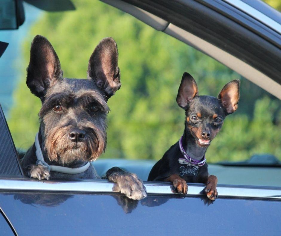 Reisen mit Hund Tipps