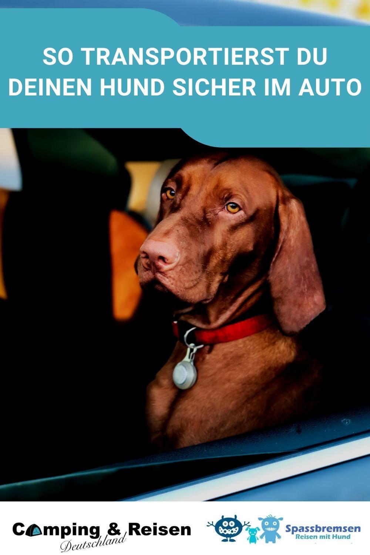 So kannst du deinen Hund sicher im Auto transportieren