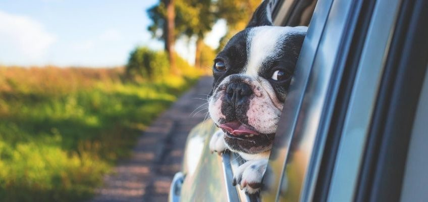 Reisen mit Hund mit Auto